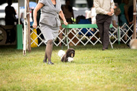 Dogshow 2016-08-13 Oak Creek--090626-2