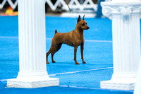 2012 Kentuckiana Dog Shows (proofs)