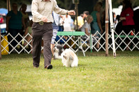 Dogshow 2016-08-13 Oak Creek--090629-2