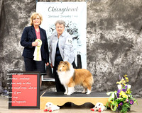 Dogshow 2017-03-05 Sheltie Win Photos--104321