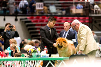 Dogshow 2017-04-08 KC of Yorkville--134533