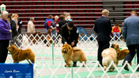 Dogshow 2017-04-08 KC of Yorkville--134728