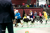 Dogshow 2017-04-08 KC of Yorkville--145101