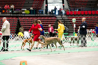 Dogshow 2017-04-08 KC of Yorkville--145106-3