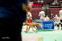 Dogshow 2017-04-08 KC of Yorkville--145114-2