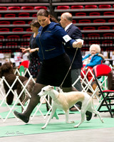 Dogshow 2017-04-08 KC of Yorkville--145155
