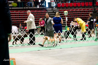 Dogshow 2017-04-08 KC of Yorkville--145206
