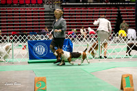 Dogshow 2017-04-08 KC of Yorkville--145219