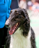 Dogshow 2017-04-08 KC of Yorkville--150424