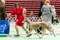 Dogshow 2017-04-08 KC of Yorkville--145624