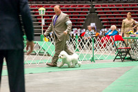 Dogshow 2017-04-08 KC of Yorkville--162353-2
