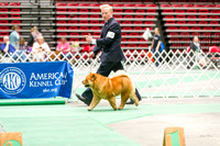 Dogshow 2017-04-08 KC of Yorkville--162408-3