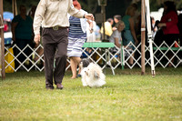 Dogshow 2016-08-13 Oak Creek--090629