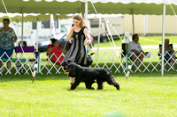 Dogshow 2017-06-04 untitled shoot--132457-2