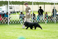 Dogshow 2017-06-04 untitled shoot--132555