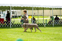 Dogshow 2017-06-04 untitled shoot--130433