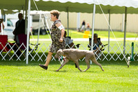Dogshow 2017-06-04 untitled shoot--130450