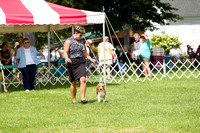 Dogshow 2017-07-31 Burlington WI KC--110859-2
