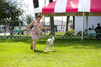 Dogshow 2017-08-01 Burlington WI KC D2--153909