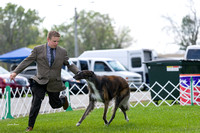 Dogshow 2017-08-01 Burlington WI KC D2--135928-2