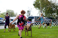 Dogshow 2017-08-01 Burlington WI KC D2--135934