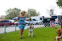 Dogshow 2017-08-01 Burlington WI KC D2--135937-2