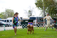 Dogshow 2017-08-01 Burlington WI KC D2--135940