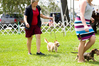 Dogshow 2017-08-01 Burlington WI KC D2--135957-2