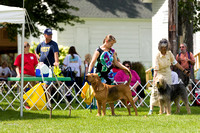 Dogshow 2017-08-01 Burlington WI KC D2--140032