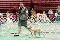 Dogshow 2017-04-08 KC of Yorkville--150635