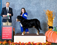 Dogshow 2017-10-28 BMDCNI Win Photos--112522-3
