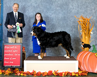 Dogshow 2017-10-28 BMDCNI Win Photos--112643