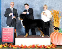Dogshow 2017-10-28 BMDCNI Win Photos--165638-3