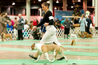 Dogshow 2017-12-09 Skokie Valley KC--173237