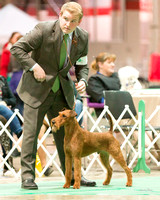 Dogshow 2017-12-09 Skokie Valley KC--173201