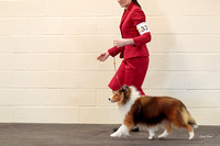 20180304 Dog Classes