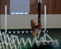 Dogshow 2018-04-07 Interlocking SSC--093024-2