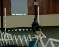 Dogshow 2018-04-07 Interlocking SSC--093820