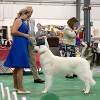 Dogshow 2018-06-13 Starved Rock KC Wed--153255