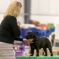 Dogshow 2018-06-13 Starved Rock KC Wed--172700