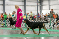 Dogshow 2018-06-13 Starved Rock KC Wed--103608-2
