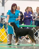 Dogshow 2018-06-13 Starved Rock KC Wed--103626