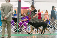 Dogshow 2018-06-13 Starved Rock KC Wed--103024-2