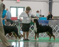 Dogshow 2018-06-13 Starved Rock KC Wed--103250