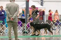 Dogshow 2018-06-13 Starved Rock KC Wed--103024