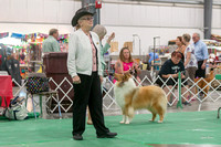 Dogshow 2018-06-13 Starved Rock KC Wed--151331