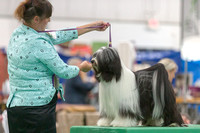 Dogshow 2018-06-13 Starved Rock KC Wed--155209