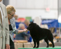 Dogshow 2018-06-13 Starved Rock KC Wed--155519