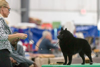 Dogshow 2018-06-13 Starved Rock KC Wed--155526
