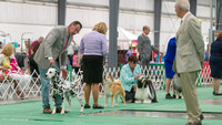 Dogshow 2018-06-13 Starved Rock KC Wed--155011